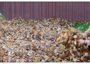 Leaf and Yard Waste Cornwall Ontario