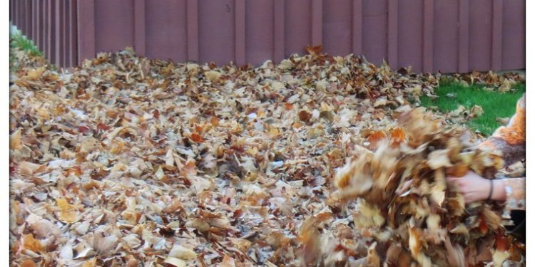 Leaf and Yard Waste Cornwall Ontario