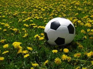 1330576_dandelions_and_soccer_ball