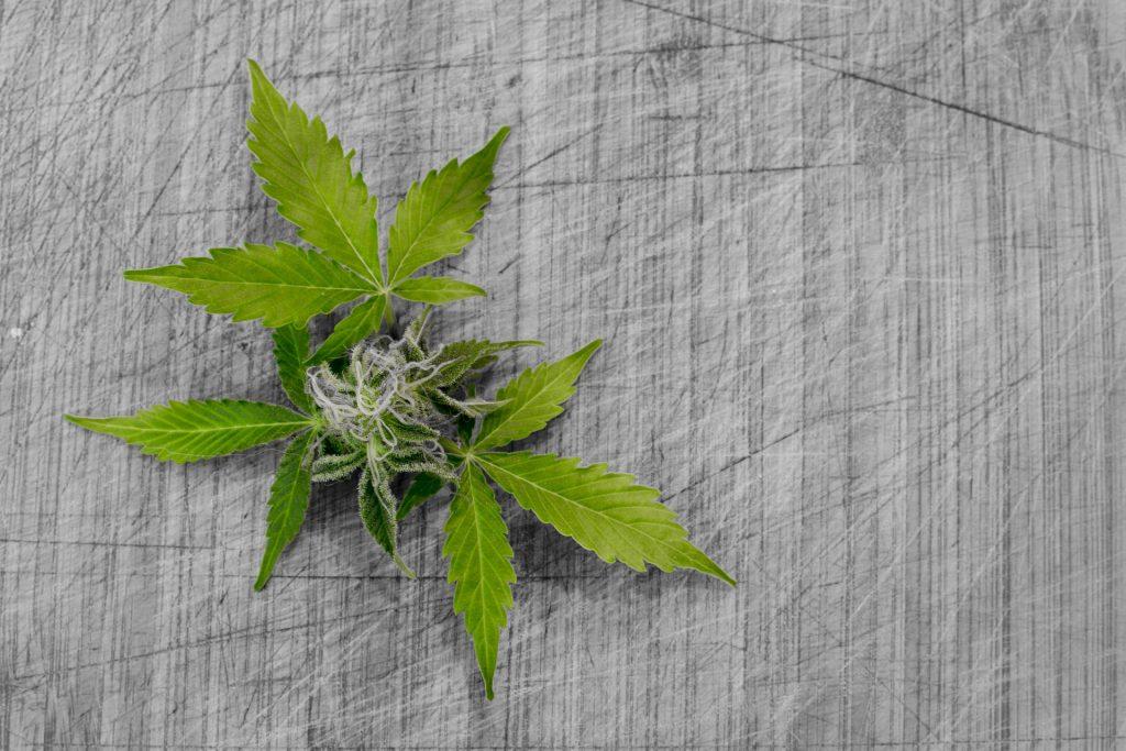 Ontario marijuana sales raise concerns