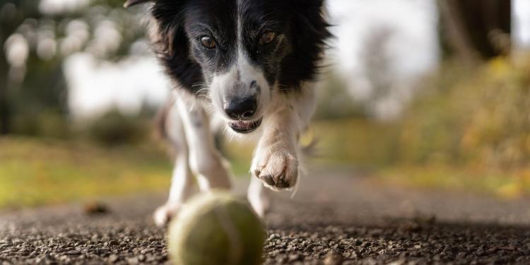 tilt shot photo of dog chasing the ball